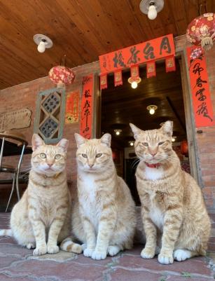 招財店貓歡迎您來看看我們!