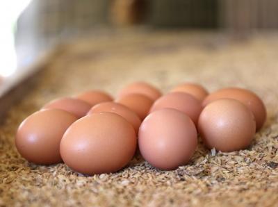 【蛋蛋的幸福】小資輕旅行方案